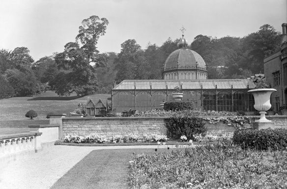 Tyntesfield Conservatory before it was demolished after it was damaged in the snow storm of 28th March 1916.