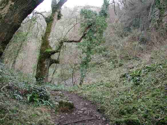 The woodland path into Ebbor Gorge.