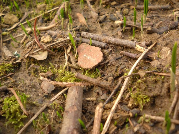 Norman pottery uncovered by rabbits burrowing into St Michael's Hill