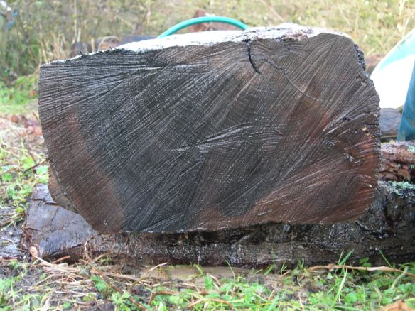 The small mount of sap wood can be seen on the extreme left with the heart wood on the right