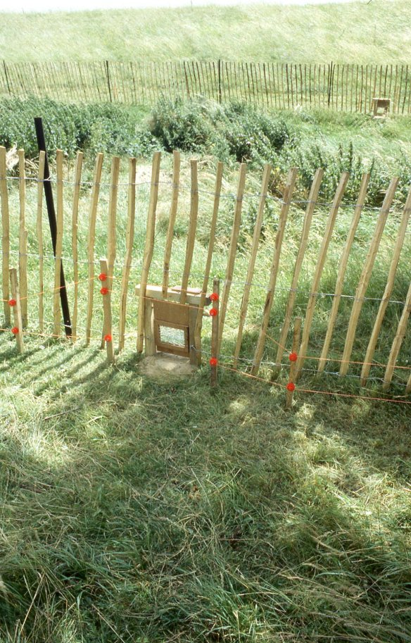 One of the two-way gates that allowed the badgers to go backwards and forwards from their new home following trails of honey-coated peanuts.