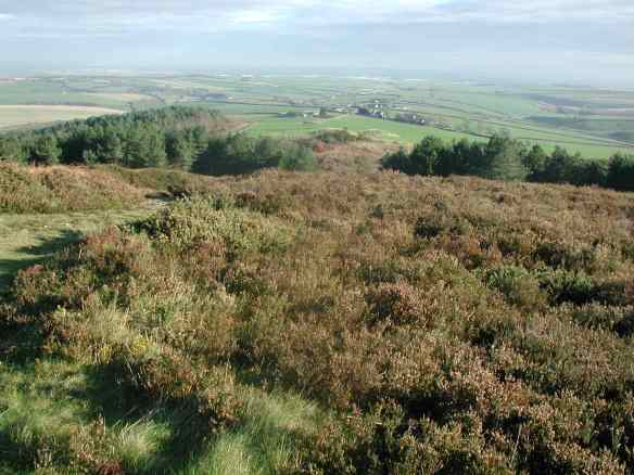 The view towards Maiden Castle and Dorchester from the heathland east of Hardy's Monument