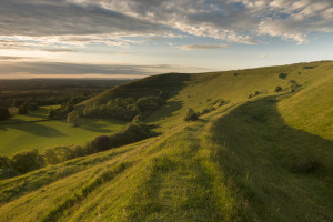 Hambledon Hill in West Dorset is a site rich in human and natural history. Credit: National Trust Images/Ross Hoddinott