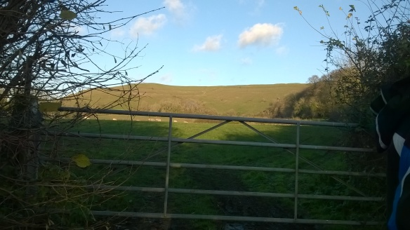 The view of Hambledon from the Childe Okeford road. It looks a bit like a great green whale.