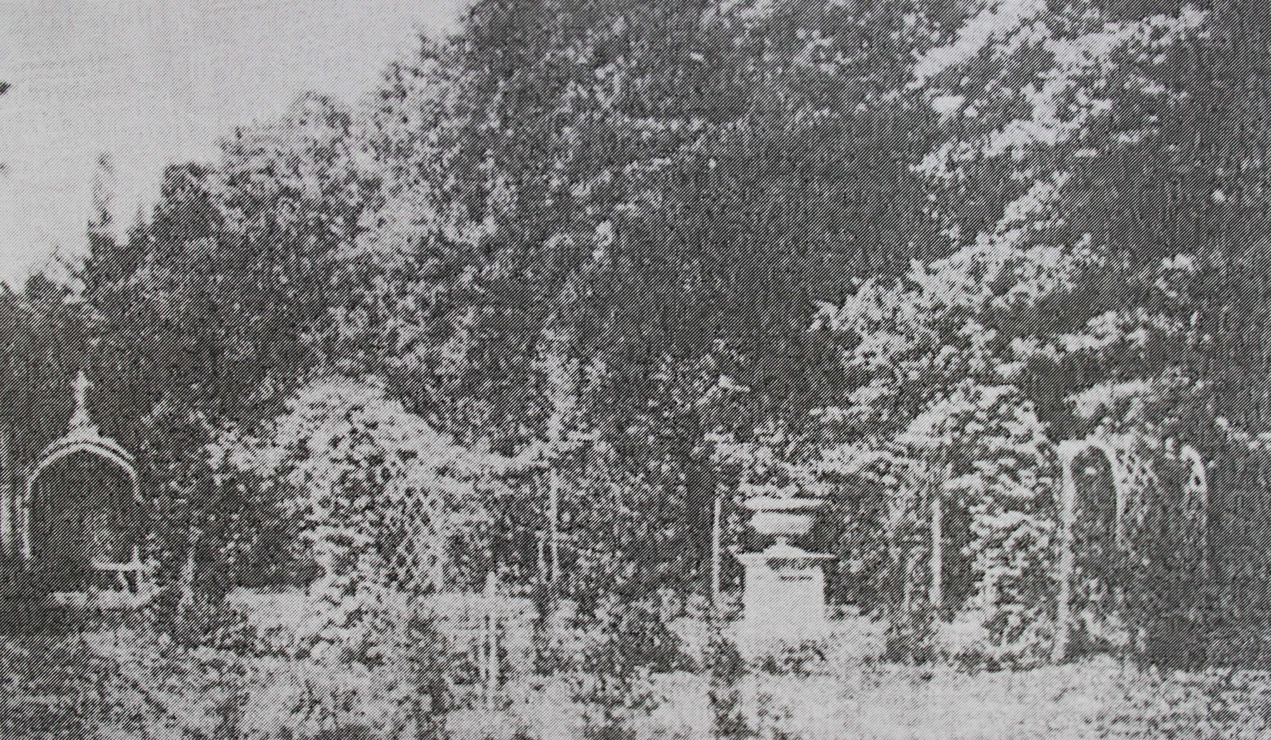 W.H. Fox Talbot's photograph of the Rose Garden taken in June 1840. One of a group of photographs he sent to the Italian botanist Antoino Bertoloni. He wrote back to say that this was the image he liked the best.